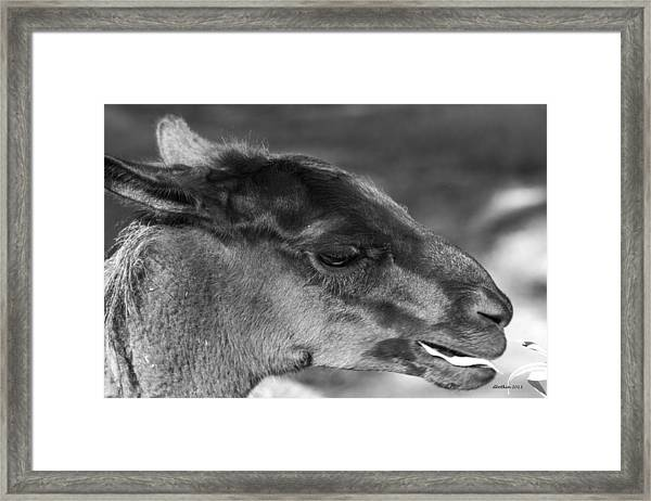 A Little Snack Framed Print by Dick Botkin