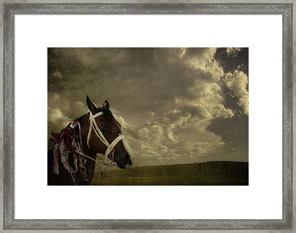 A Lovely Horse Framed Print