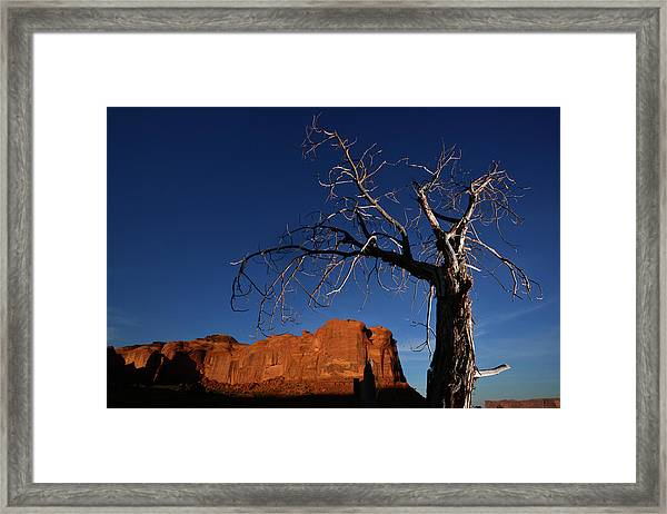 A Mesquite Trees And Buttes Framed Print