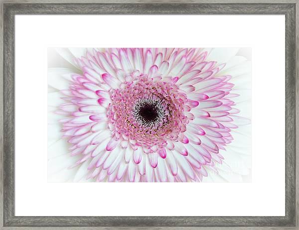 A Million Petals Framed Print