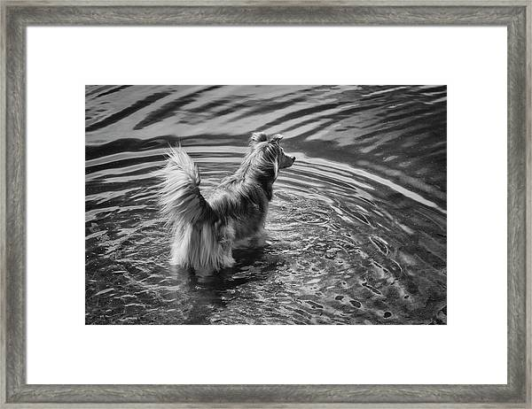 A Mixed Herding Breed Dog Stands Framed Print