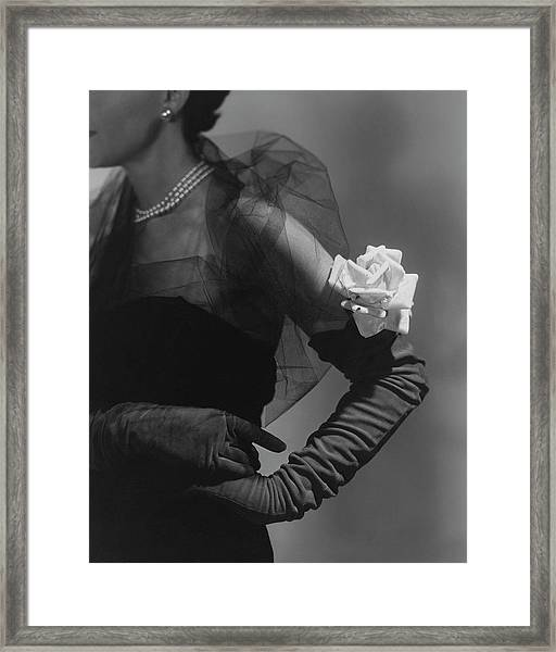 A Model Wearing And Velvet Rose Framed Print