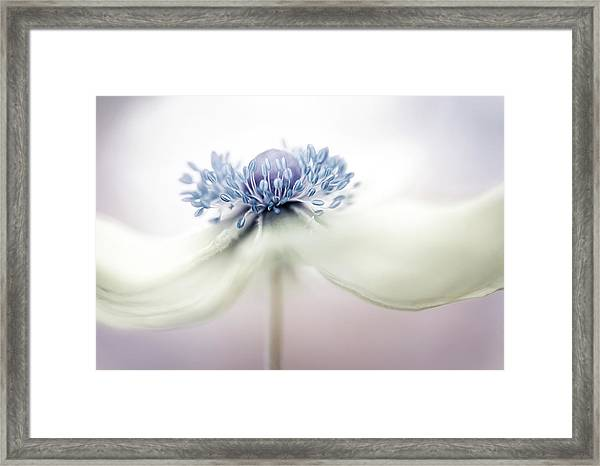 A N E M O N E Framed Print by Mandy Disher