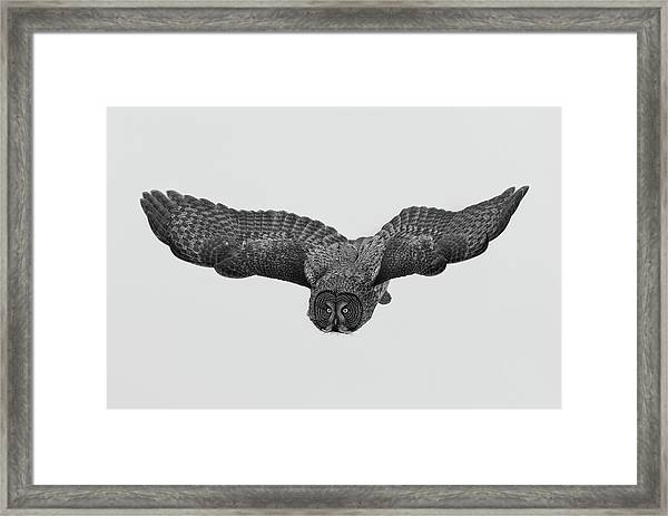 A Northern Phantom Framed Print