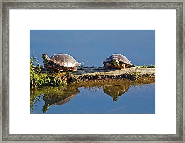 A Pair Of Painted Turtles Sun Framed Print