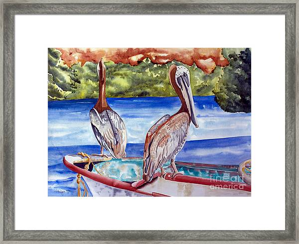 A Pair Of Pelicans Framed Print