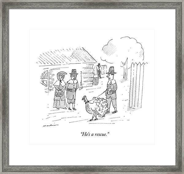 A Pilgrim Walks A Turkey On A Leash Framed Print