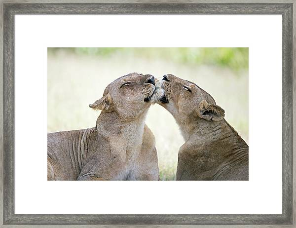 A Pleasant Afternoon Framed Print by Marco Pozzi