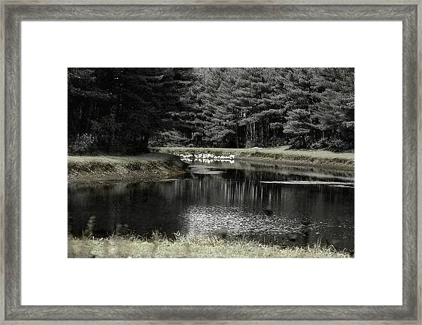 A Pond Framed Print