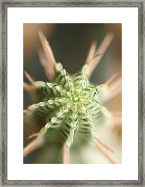 A Prickly Affair Framed Print
