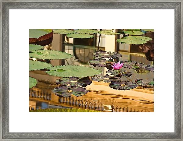 A Reflection Framed Print