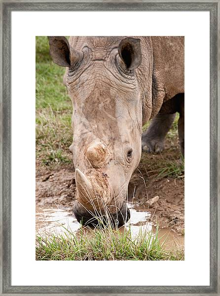 A Refreshing Drink Framed Print