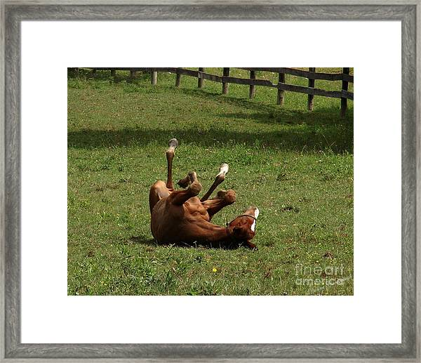 A Roll In The Hay Is For Horses Framed Print