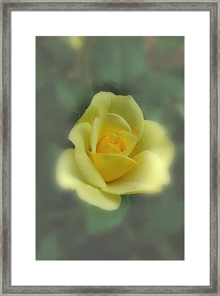 Framed Print featuring the photograph A Rose Is A Rose by David Armstrong