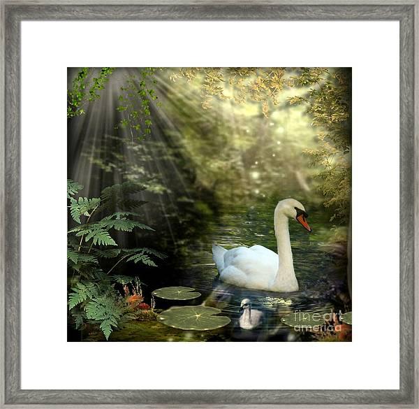 A Shady Brook Framed Print