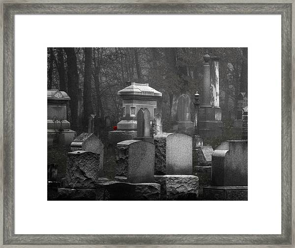 A Single Red Rose Framed Print