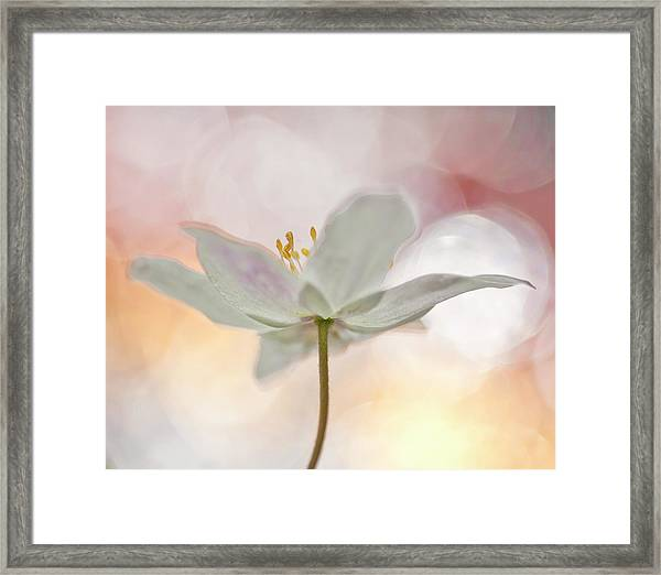 A Sip Of Art Framed Print