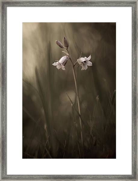 A Small Flower On The Ground Framed Print