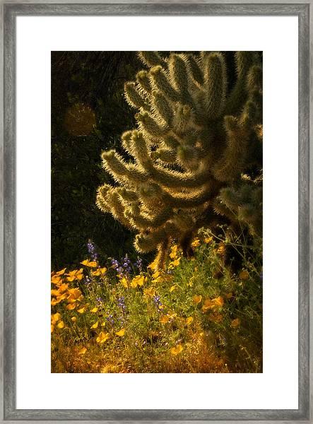 A Southwestern Spring  Framed Print