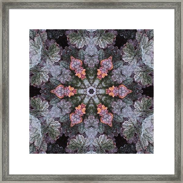 A Spider Web On Coral Bells Framed Print