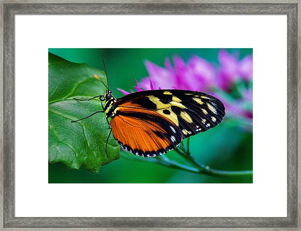 Framed Print featuring the photograph A Splash Of Colour by Garvin Hunter