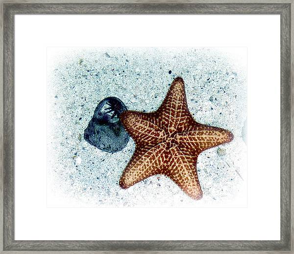 Framed Print featuring the photograph A Star Is Born by William Havle