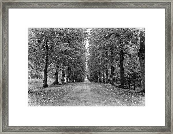 A Straightforward Path Framed Print