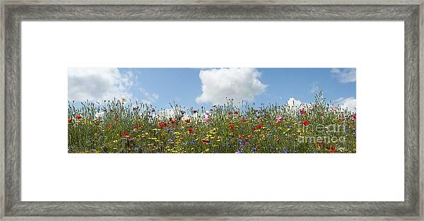 A Summers Day Framed Print by Tim Gainey