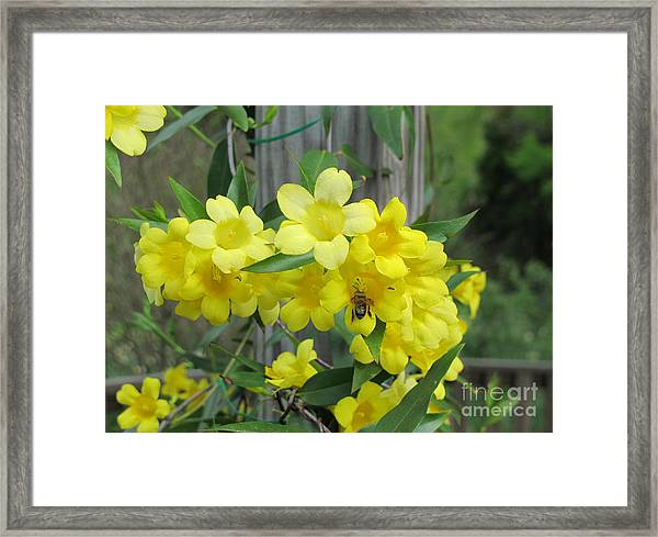 A Taste Of Yellow Framed Print