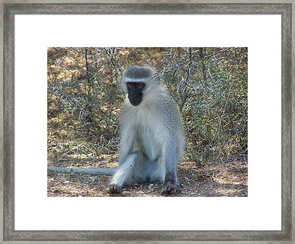 A Time To Relax Framed Print