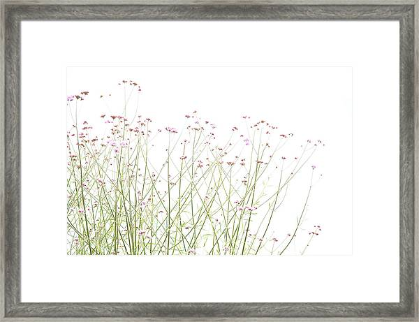A Touch Of Mauve Framed Print