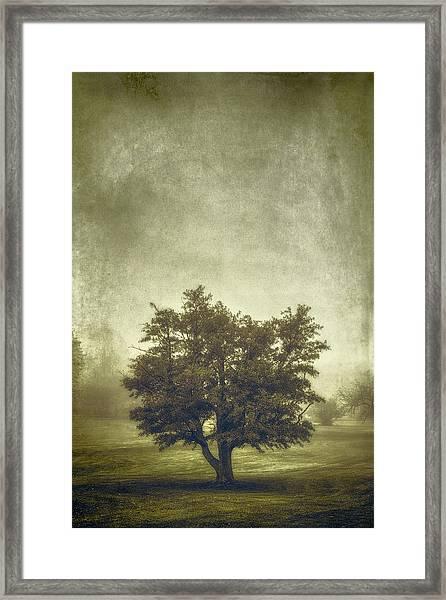 A Tree In The Fog 2 Framed Print