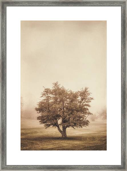 A Tree In The Fog Framed Print