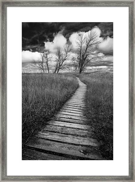 A Tree's Road Framed Print
