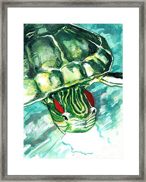 A Turtle Who Likes To Eat Fish Framed Print