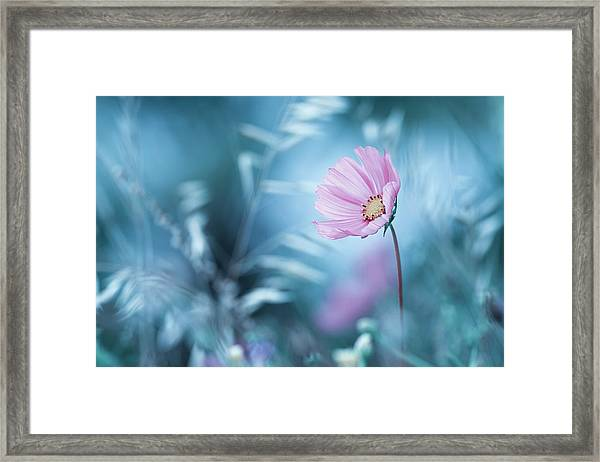 A Walk In Dreamland Framed Print