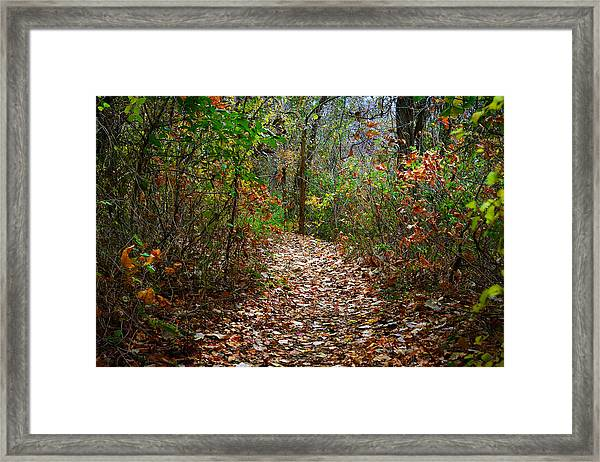 A Walk To Remember Framed Print