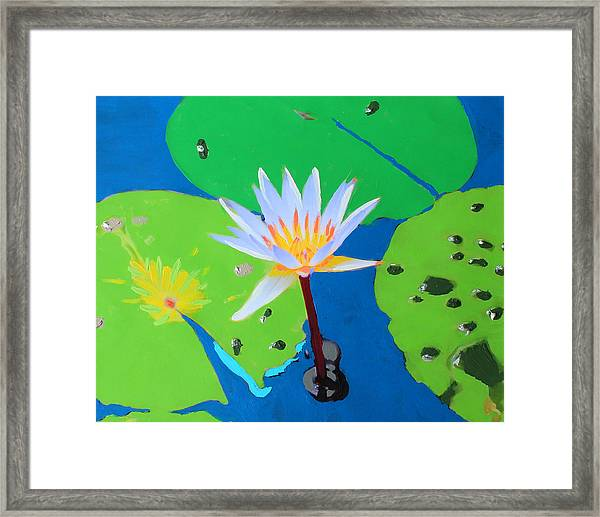A Water Lily In Its Pad Framed Print