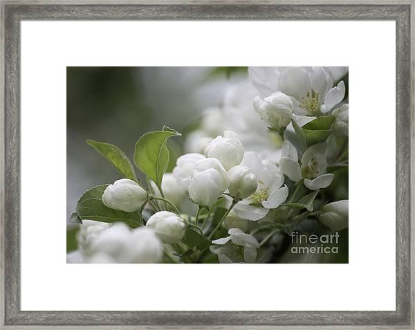 A Whisper Of Spring Framed Print