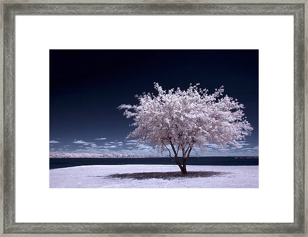 A Winter Summer Framed Print