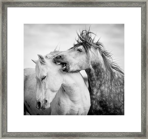 A Word In Your Ear Framed Print by Tim Booth