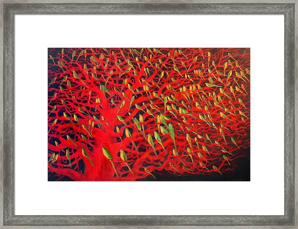 About 180 Orange Bellied Parrots  Framed Print
