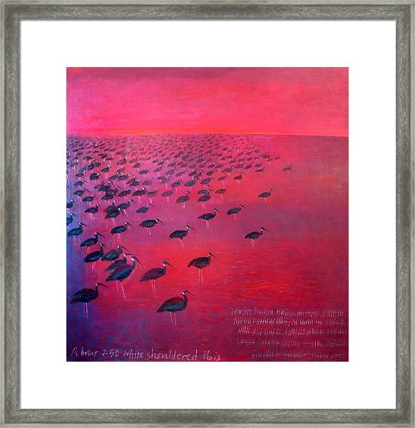 About 250 White Shouldered Ibis Oil On Canvas Framed Print