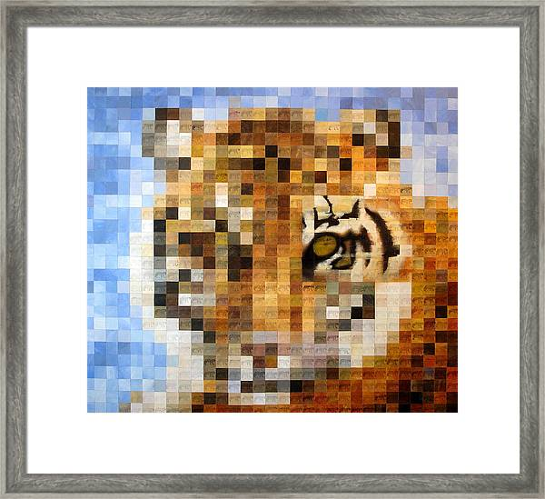 About 400 Sumatran Tigers Framed Print