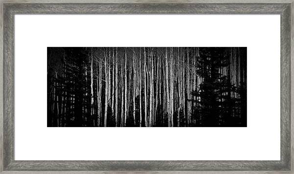 Abstract Aspens Framed Print