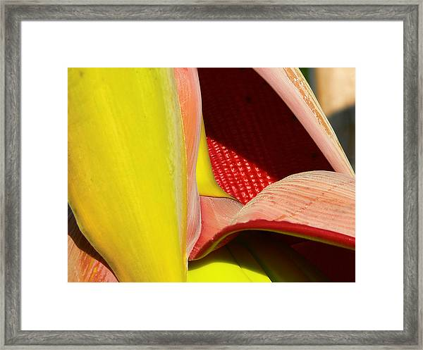 Abstract Banana Bloom Framed Print