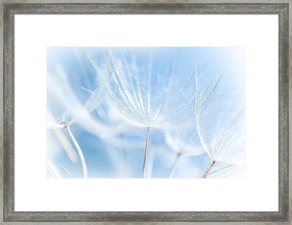 Abstract Dandelion Background Framed Print by Anna Om