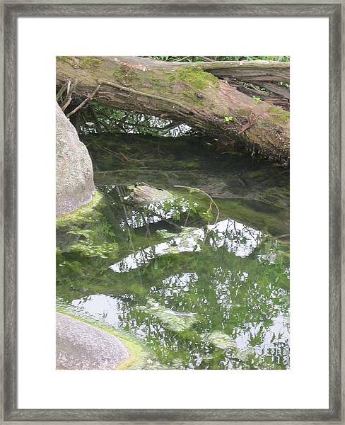 Abstract Nature 3 Framed Print