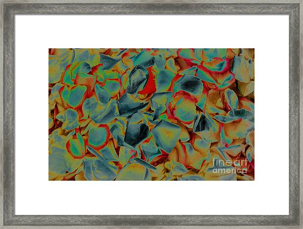 Framed Print featuring the photograph Abstract Rose Petals by Mae Wertz