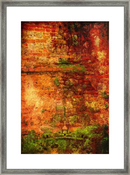 Abstract Vines On Wall - Radi Italy Framed Print